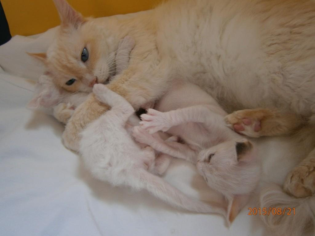 Mamma har fullt upp nu när ungarna är större och hon måste hålla fast dom för lite pälstvätt!