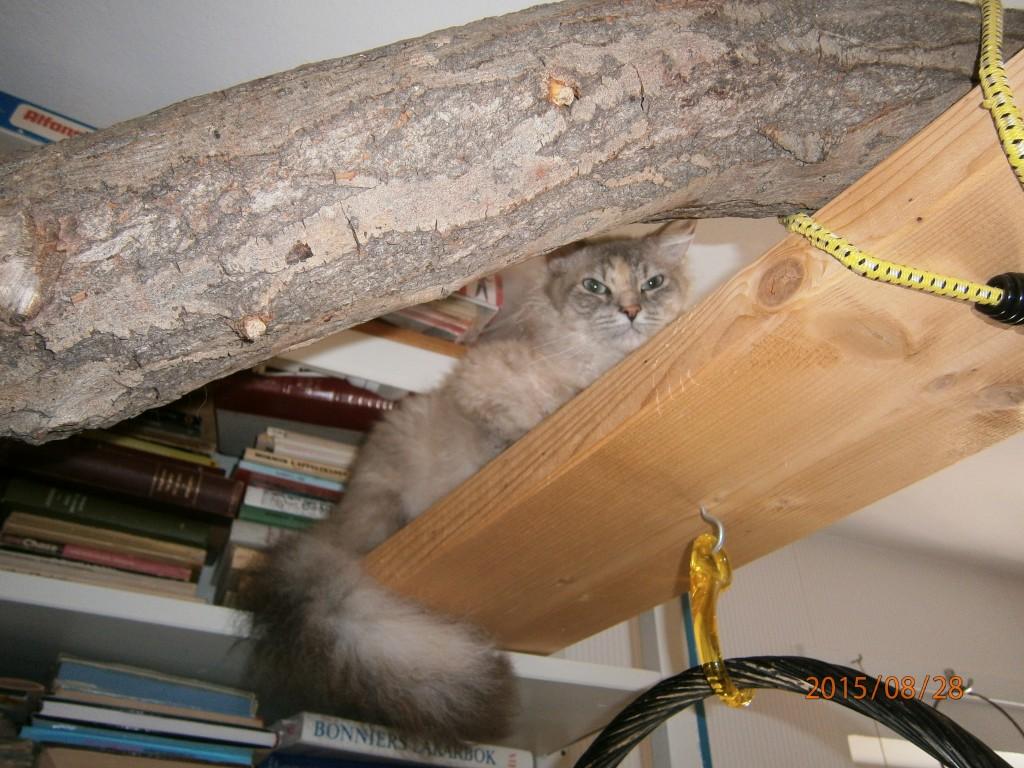 Här försöker Luna göra sej osynlig när hon ska fångas in för att åka hem till Umeå.