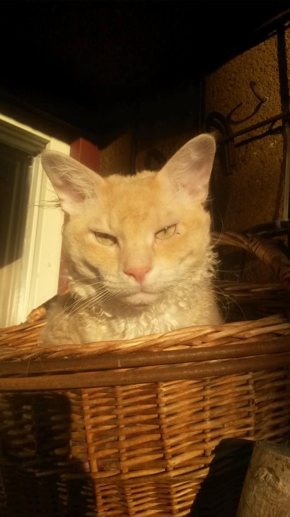 Pappa katt; Nyponrosens Skips.