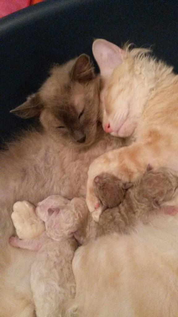 Inga-Britt och Anders är mycket tillsammans med tussarna ofta sover dom tillsammans med ungarna mittimellan. Då ser dom ut såhär.