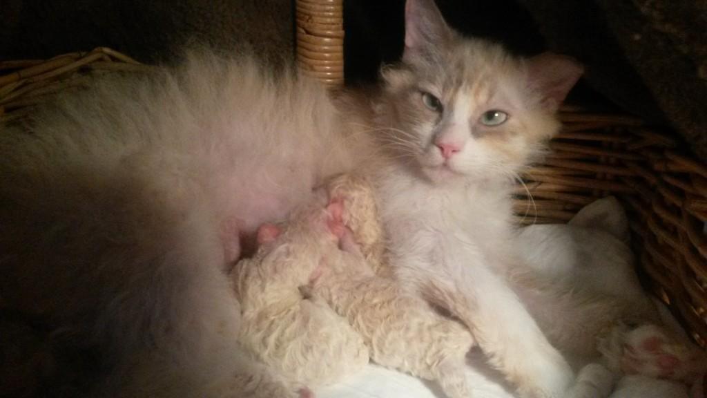Vår förstagångsmamma Elsa - som hon kallas hemma - födde 4 jättestora ungar! Hon laddade upp inför  nedkomsten ett dygn innan och när det var dags så gick det så fort  och lätt - en så duktig flicka hon är!