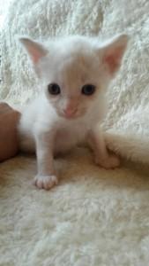 Lill-kille 1.