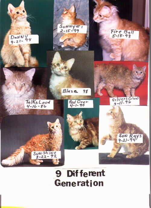 Här syns 9 av de första generationernas la perm. Man kan se att dagens la perm har bibehållit det typiska la perm-uttrycket och utseendet!
