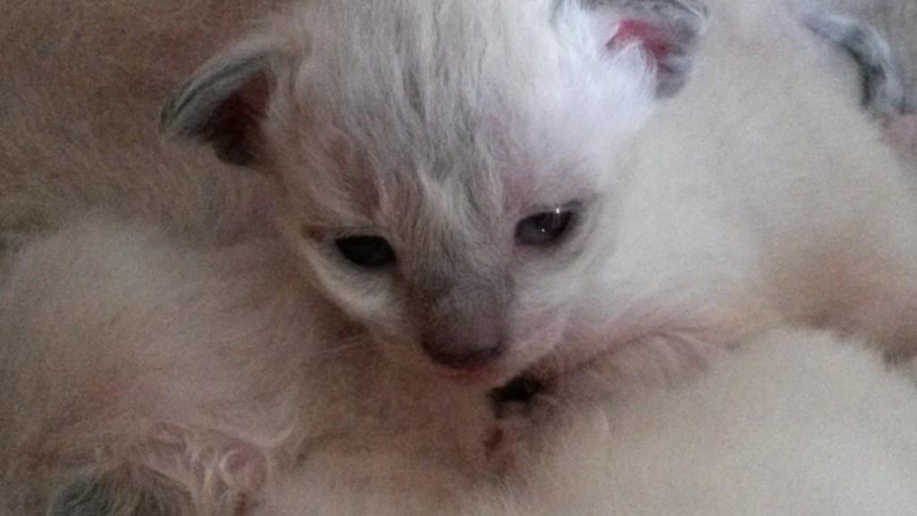 Lilla S*divineCURLYcats Älskling på sitt första foto.