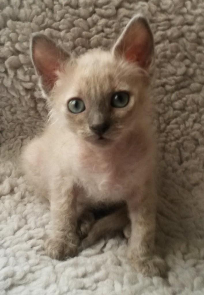 Camelot är en förtjusande liten kattfröken!