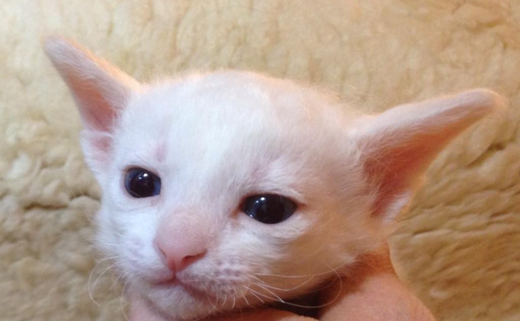 Lille Felix är till salu.